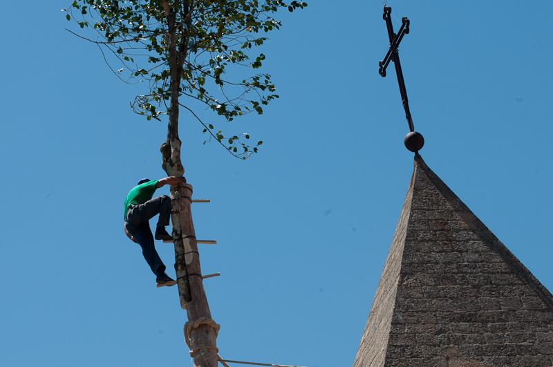 Rocco scala l'albero a Pietrapertosa