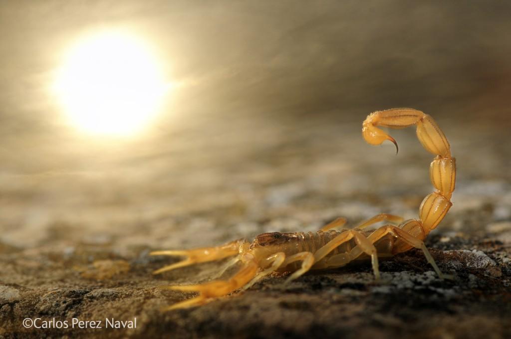 Carlos Perez Naval / / Wildlife Photographer of the Year 2014