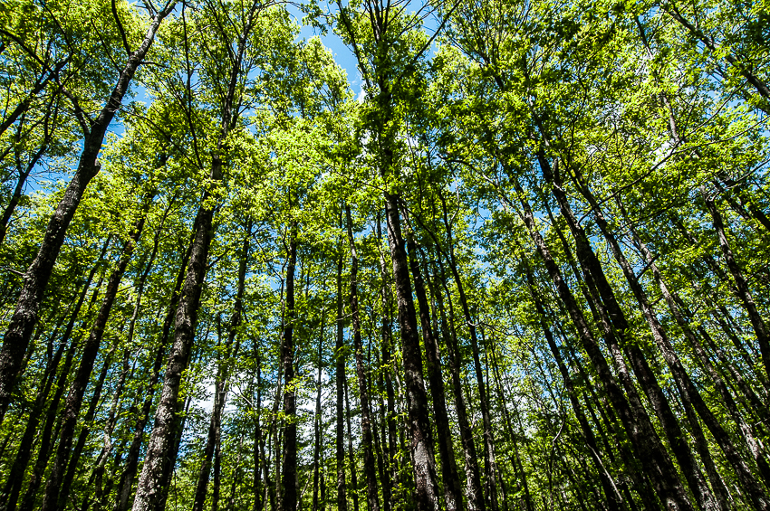 La foresta di Cugno d'Acero