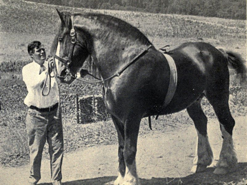 800px-jack_london_with_his_stallion_neuadd_hillside_1916