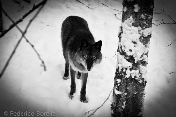 Alaska | Erodoto108
