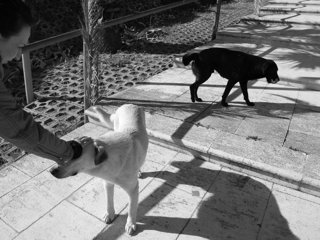 I cani di Gibellina