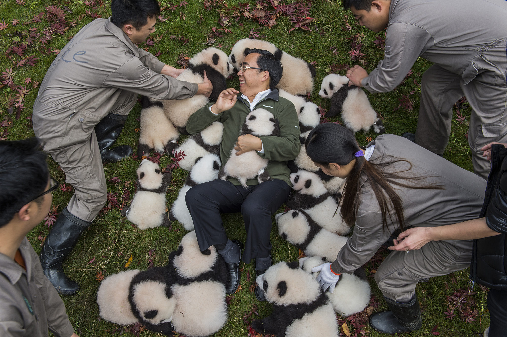 """Zhang Hemin—""""Papa Panda"""" to his staff—poses with cubs born in 2015 at Bifengxia Panda Base. """"Some local people say giant pandas have magic powers,"""" says Zhang, who directs many of China's panda conservation efforts. """"To me, they simply represent beauty and peace."""""""