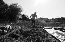 autoproduzione agricola Siena