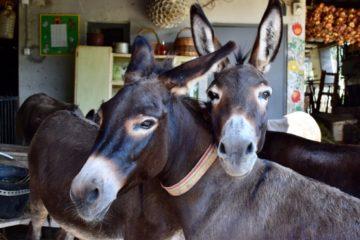 Farma magaraca Martinići